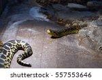 snake in the zoo   Shutterstock . vector #557553646