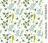 herbs seamless pattern. parsley ... | Shutterstock .eps vector #557566552