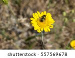 fly on a yellow flower | Shutterstock . vector #557569678