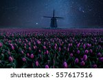Night Field Of Tulips And...