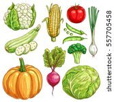 vegetables sketch icons of... | Shutterstock .eps vector #557705458