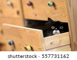 Stock photo a cat playing hide and seek inside the drawer 557731162