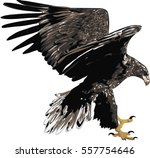 eagle     detailed realistic... | Shutterstock .eps vector #557754646