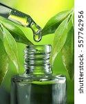 a drop of eucalyptus oil close... | Shutterstock . vector #557762956