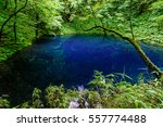 japanese landscape   shirakami  ... | Shutterstock . vector #557774488