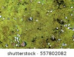 Green Moss On Stone Background