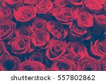 Stock photo  bouquet of red roses closeup 557802862