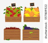wooden box for fruit and... | Shutterstock .eps vector #557809522