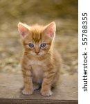 Cute Little Farm Kitten With...