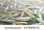 a small marine fish  dried high ...   Shutterstock . vector #557899672