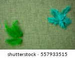 coloured bird feathers on a... | Shutterstock . vector #557933515