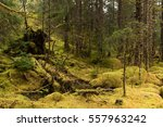 Fallen Trees And A Tree Stump...