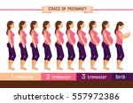 pregnancy stages flat vector... | Shutterstock .eps vector #557972386