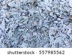 cloesup of foliage covered in... | Shutterstock . vector #557985562