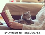 Stock photo soft cuddly tabby cat lying in its owner s lap enjoying and purring while the owner is reading a 558030766