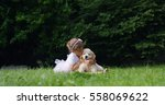 Stock photo cute toddler little two years old girl gives a kiss to a golden retriever puppy on a green widow in 558069622