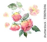 set of watercolor roses  hand... | Shutterstock . vector #558096346