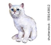Stock photo watercolor close up portrait of popular british shorthair silver kitten isolated on white 558143812