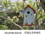 Kohlmeise  Bird  At Nesting Box