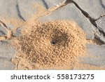 Small Anthill From The Sand On...