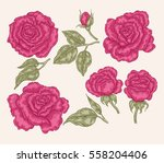 pink rose flowers and leaves in ... | Shutterstock .eps vector #558204406