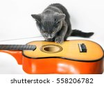 Stock photo musician gray kitten playing with a guitar on a white background 558206782