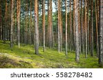 Beautiful Mixed Pine And...