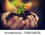 hand and plant | Shutterstock . vector #558318028