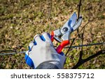pruning shears clipping grape...   Shutterstock . vector #558375712