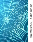 Spider Web On Blue Blurred...