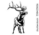 deer isolated on white... | Shutterstock .eps vector #558425836