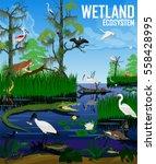 vector wetland ecosystem... | Shutterstock .eps vector #558428995
