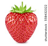 strawberry berries with leaves... | Shutterstock . vector #558432322