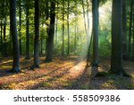 morning in the forest | Shutterstock . vector #558509386