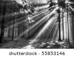 God Beams   Coniferous Forest...