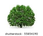 majestic oak tree | Shutterstock . vector #55854190