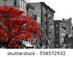 Red Fall Tree In Black And...