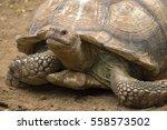 Big Turtle Closeup Portrait