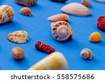 Small photo of Seashell Collection with Focused on Alphabet Cone Shell Isolated on Blue Background