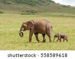 Stock photo african elephant with calf walking behind on a grassy plain at masai mara national reserve kenya 558589618