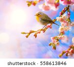 abstract spring landscape ... | Shutterstock . vector #558613846