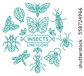 Set Of Vector Outline Insects...
