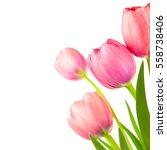 Big Spring Tulips Frame For...