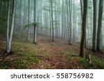 foggy morning in woods | Shutterstock . vector #558756982
