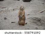 Marmots On Duty