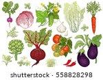 Vegetables Roots  Salads ...