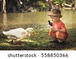 Boy And Geese Near Lake....