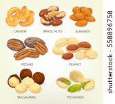 nuts and seeds  beans and... | Shutterstock .eps vector #558896758