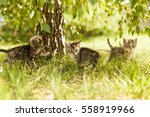 Gray Kitten In The Grass