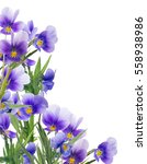 corner from pansy flowers... | Shutterstock . vector #558938986